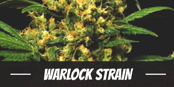 Warlock Strain