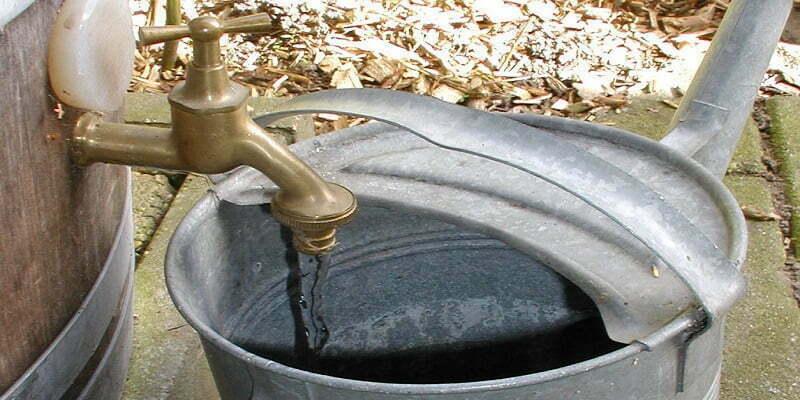 Watering cannabis grown in soil