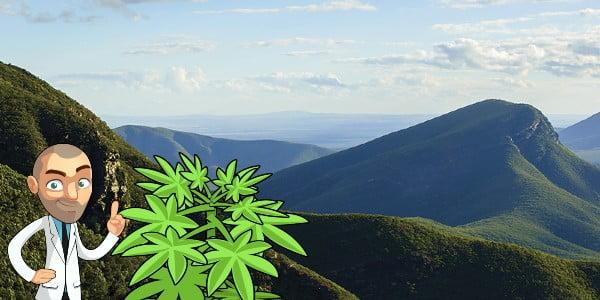cannabis seeds western australia