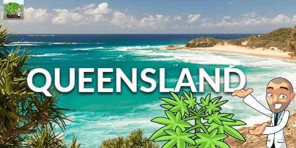 Where to Buy Cannabis Seeds Queensland