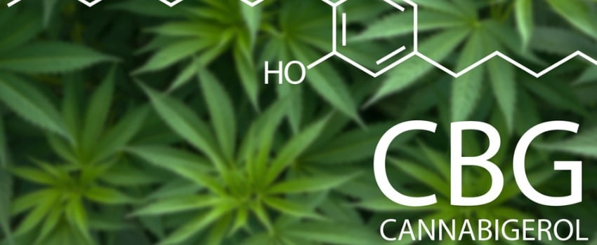 Where to Find Strains with High Levels of CBG
