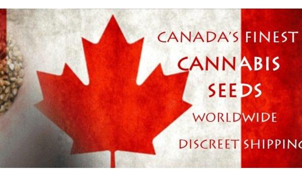 Where to buy marijuana seeds in Canada