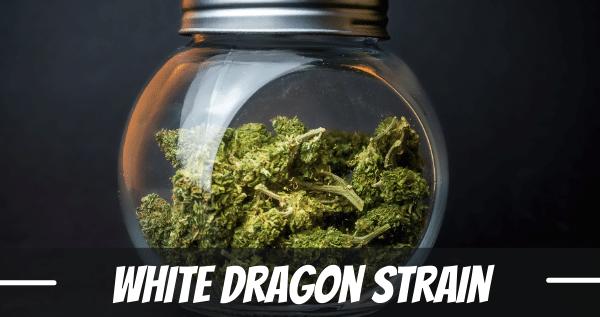 White Dragon strain