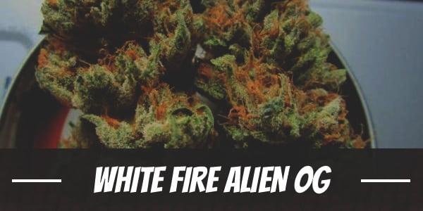 White Fire Alien OG