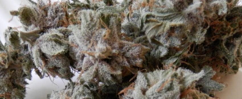 White Lotus Medical