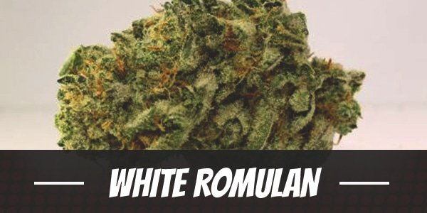 White Romulan