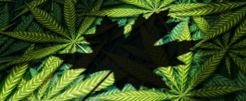 Why did the Government of Canada legalize Marijuana?