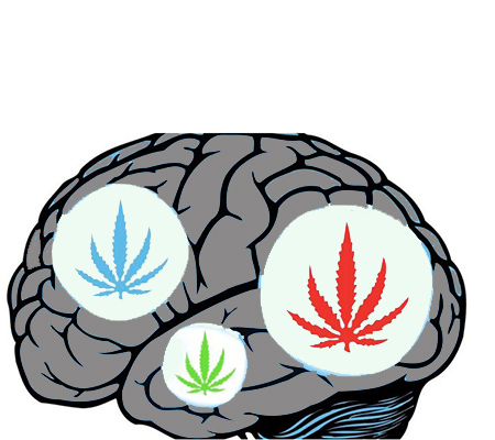 Why does THC work so well with our brains