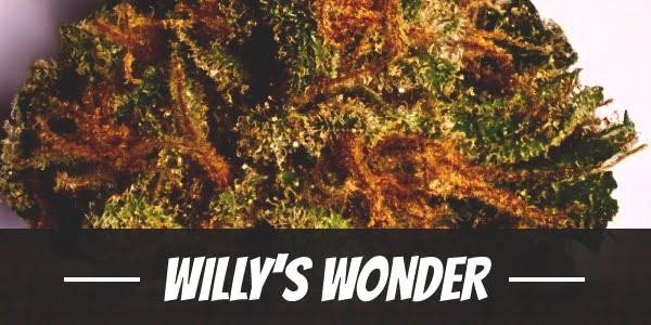 Willy's Wonder