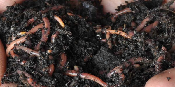 Make your own compost - Worm castings