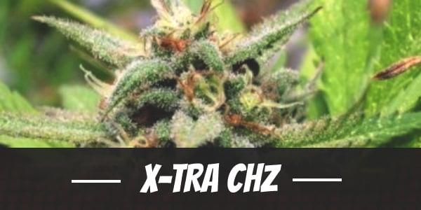 X-Tra Chz