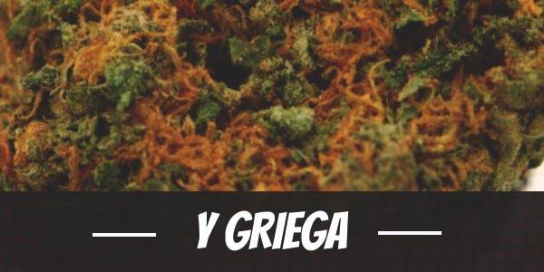 Y Griega