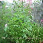 About natural marijuana repellents