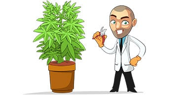 advanced grow guides