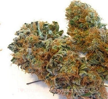airy and loose marijuana buds