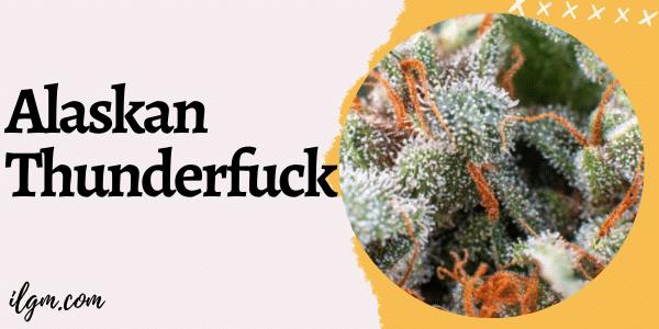 Alaskan Thuderfuck