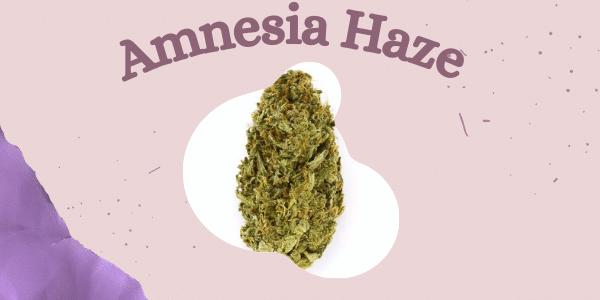 Amnesia Haze cannabis strain Efects