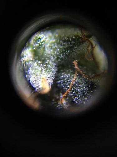 close-up-image