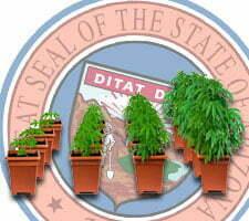 growing weed in arizona