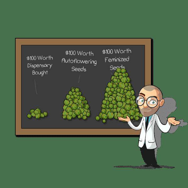 yield per seed type