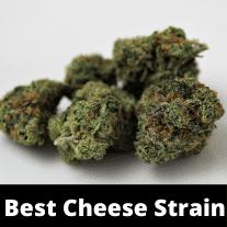 best-cheese-strain