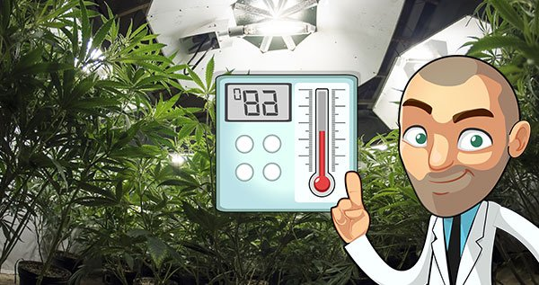 Best temperature growing marijuana