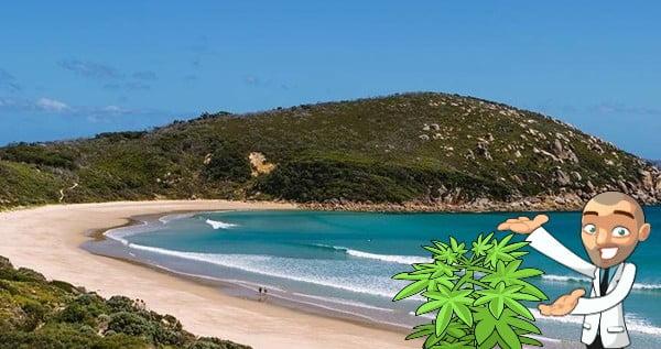 cannabis seeds victoria australia
