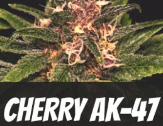 Cherry AK 47