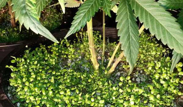companion plants growing