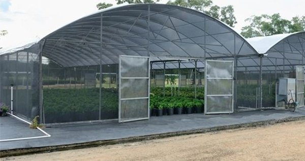 Connected cannabis greenhouses