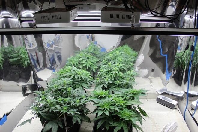 Grow room procedure