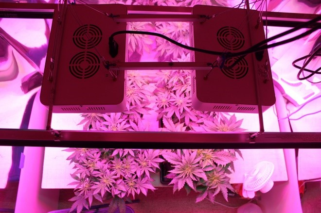 plants-with-pink-lights
