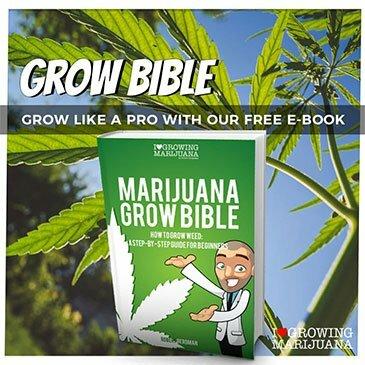 download the marijuana grow bible