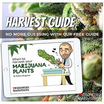 download-the marijuana harvest guide