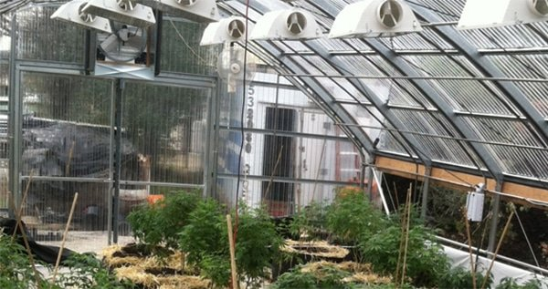 Extra grow lights in greenhouse