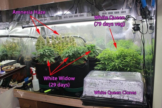 inside-grow-room