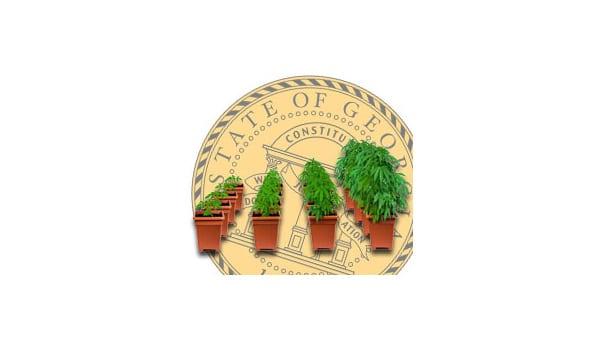 georgia cannabis growing