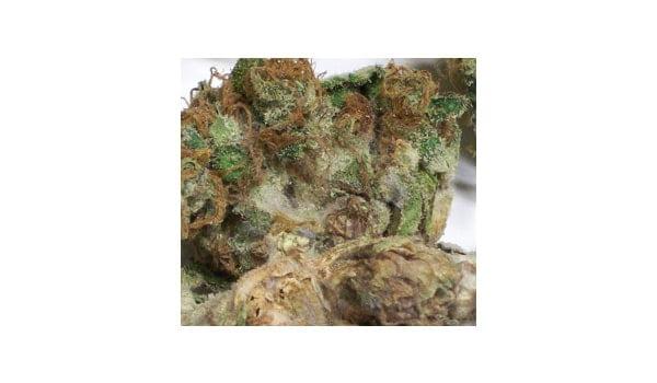 get rid of but rot botrytis and grey mold marijuana