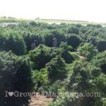 Good marijuana soil