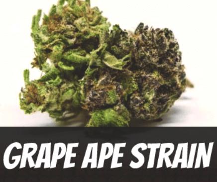 grape-ape-strain