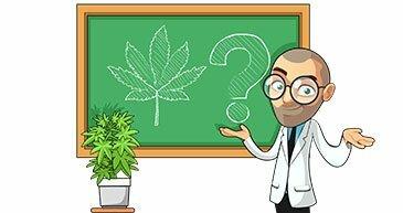 marijuana grow support