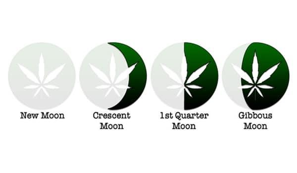 grow weed moon