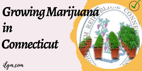 Grow marijuana in Connecticut