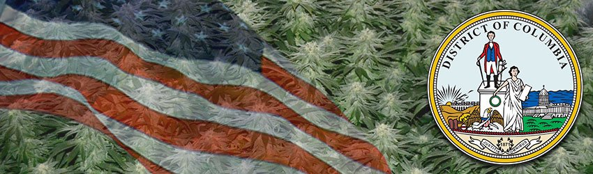 washington dc cannabis growing