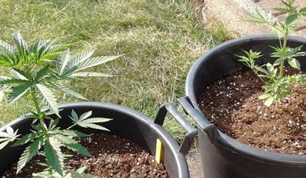 growing outdoor june