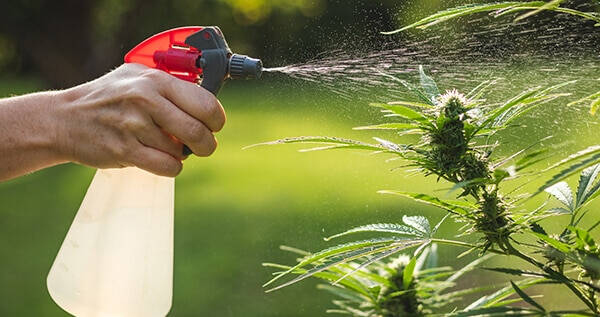hard or soft water for cannabis plants