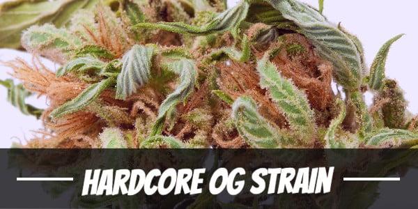Hardcore OG Strain