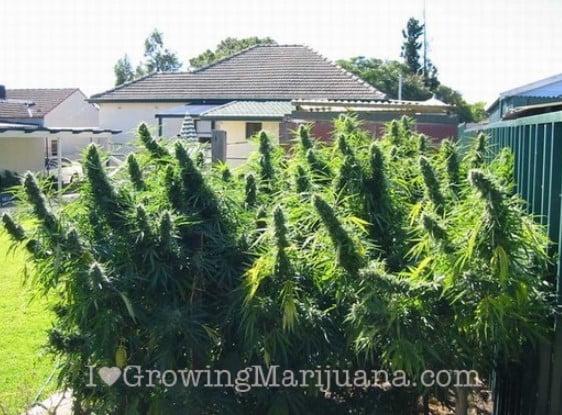 harvesting your plants