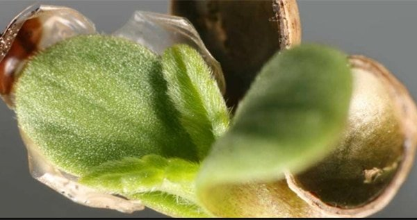high-quality-seeds