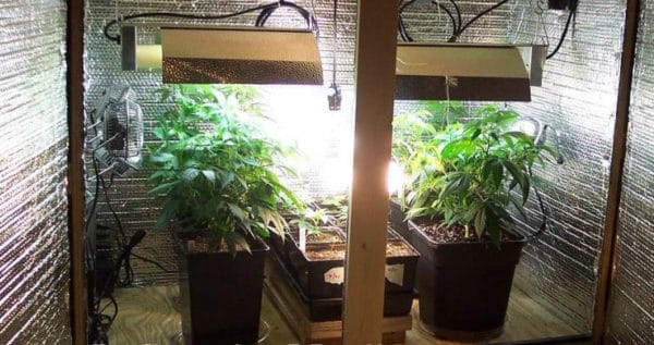 Grow Room Requirements